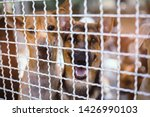 close up stray dogs  life... | Shutterstock . vector #1426990103