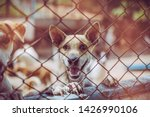 close up a stray dog  alone... | Shutterstock . vector #1426990106