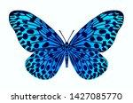 beautiful blue butterfly on... | Shutterstock . vector #1427085770