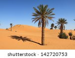 Palm Tree In Erg Chebbi  At...