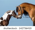 two horses on blue background.