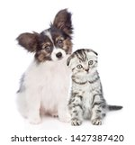 Stock photo papillon puppy and kitten with tilt heads sitting together isolated on white background 1427387420