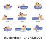 pug set. learning preposition...   Shutterstock .eps vector #1427525003