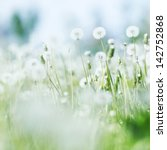 beautiful white dandelion... | Shutterstock . vector #142752868