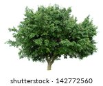 banyan tree isolated on white... | Shutterstock . vector #142772560