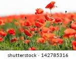 Poppy Flower In The Meadow ...
