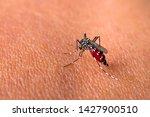 Aedes Aegypti Mosquitoe Bite...