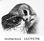 owl drawing | Shutterstock . vector #142795798