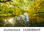 autumn forest river tree... | Shutterstock . vector #1428088649