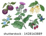 medical plants  flowers  fruits ... | Shutterstock .eps vector #1428163889