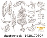 bananas tree and ripe bunch and ... | Shutterstock .eps vector #1428170909