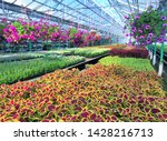 inside the greenhouse  in the... | Shutterstock . vector #1428216713