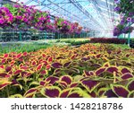 inside the greenhouse  close up ... | Shutterstock . vector #1428218786