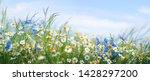 Beautiful Field Meadow Flowers...