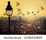 Paris Rooftops. Flying Pigeons...