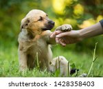 Small photo of homeless puppy mixed breed mutt dog giving paw to human hand