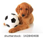 Cute Puppy With A Soccer Ball ...