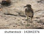 Birds Of The Savannah And Arid ...