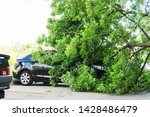 The Tree That Fell On The Car...