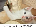 Stock photo lovely kitten playing with toy mouse 142856083