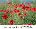poppy  with out of focus poppy... | Shutterstock . vector #142858204