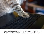 Stock photo keyboard cat paws on the computer work in the office at the computer 1429131113
