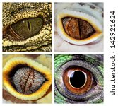 A Collage Of The Eyes Of Four...