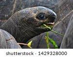 Stock photo seychelles giant tortoise on praslin island 1429328000