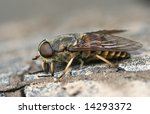 Small photo of The importunate insect, preventing to carry out week-end