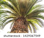 Leaves And Palm Trees Cycas ...