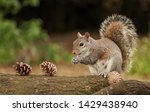 Cute Squirrel In The Park  3