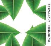 tropical background  summer...   Shutterstock .eps vector #1429442696