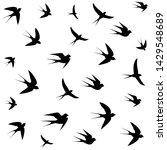 birds soaring high in the sky...   Shutterstock .eps vector #1429548689