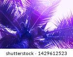 purple gradient theme on... | Shutterstock . vector #1429612523