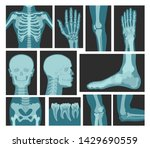 x rays of human body  medical... | Shutterstock .eps vector #1429690559