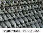 Row Of Fresh Fish  Thai Carp ...