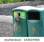 Sciuridae   Tree Squirrel...
