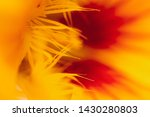 Colorful Nasturtium Flowerage...