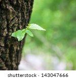 """Single Green Leaf On Tree. """"new ..."""