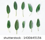 sage leaf isolated on white... | Shutterstock . vector #1430645156