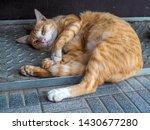Street Orange Cat Sleep On...