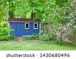 Blue She Shed And Lilac Bush I...