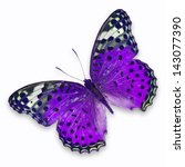 Stock photo purple butterfly isolated on white background 143077390