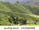 tea plantation in the cameron... | Shutterstock . vector #143086888