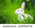 beautiful little white rabbit... | Shutterstock . vector #1430960726
