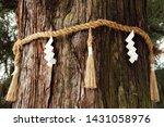 Stock photo shide on shimenawa around a yorishiro tree at kasuga taisha shinto shrine nara japan 1431058976