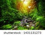 Small Stream In Guadeloupe...