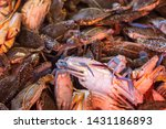 many fresh blue crabs catch   Shutterstock . vector #1431186893