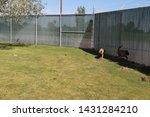 yuma sector  ariz.   us   april ...   Shutterstock . vector #1431284210