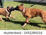 yuma sector  ariz.   us   april ...   Shutterstock . vector #1431284216